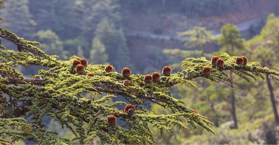 Iedere drum die geboren wordt is een nieuwe tak aan de wereldboom